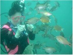 5mぐらいの浅い海で楽しめます|魚に囲まれ楽しめます